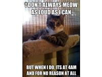 Cat sitter/ for free (holiday cover-cattery alternative)