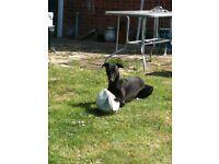 Dog walker in Edlington