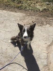Puppy missing