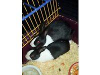 rabbits 4 sale