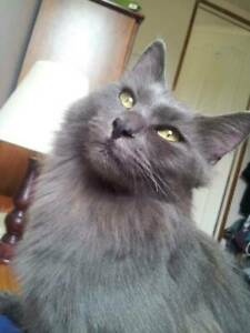 """""""McFURSON"""" - Loving Home Needed for Beautiful Timid Rescue Cat"""