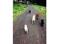 Dog Walking & Pet Service Edinburgh