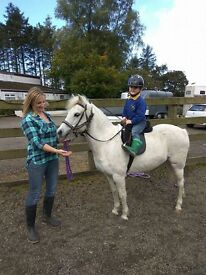 Pretty aged grey mare pony, great lead rein pony or 2nd pony for capable rider. Can also drive
