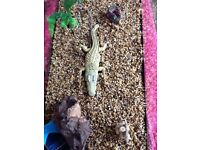 60 litre fish tank aquarium and accessories for sale incl filter heater gravel and ornaments