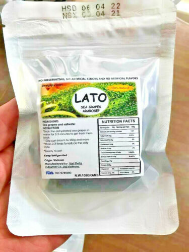 BIG Package LATO Sea Grapes Seaweed Jumbo 100 Grams