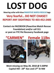 Lost dog in Capitol Hill small black chi mix
