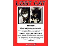 LOST CAT SCARLETT (LITTLE SUTTON)
