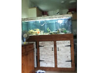 5ft fish tank selling as a viv with lights