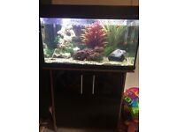 Aqua One Tropical Fish Tank - complete set up