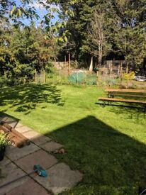 Garden services in Stroud area