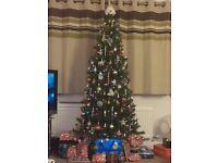 Narrow 6ft Christmas Tree, 2 years old