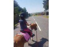 Shetland pony and tack