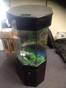 Cool fish tank upright Peakhurst Hurstville Area Preview