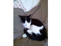 Cat was found on Malmesbury Road