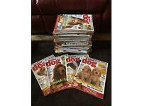 Your Dog Magazines