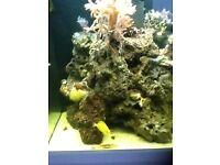 Marine Aqua I fish tank with everything you need and extra