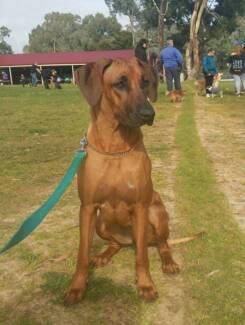 Top Petz Dog Training - Canine Coaching in Southern Suburbs