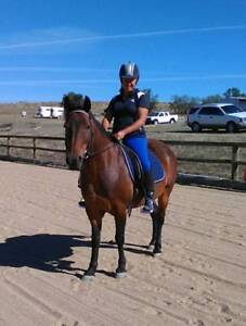 Registered Waler x Pony – for sale or lease – to the right person Young Young Area Preview