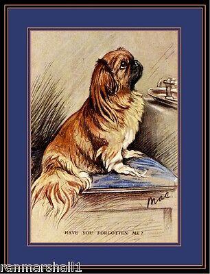 English Picture Print Pekingese Puppy Dog Dogs Begging Vintage Poster Art