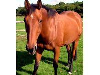 PRESCEND HORSE CUSHINGS TABLETS