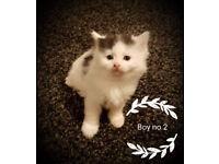 Lovley kittens