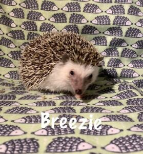 Young male hedgehog with his amazing cage!