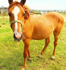 Yearling filly