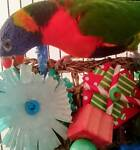 Birdies Bizzo Bird Toys