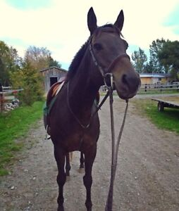 Warmblood mare for lease/part board