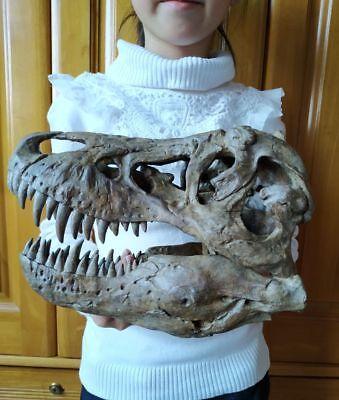 NEW, 25CM ,  Dinosaur model / T-REX Skull Model ZB-1802 for sale  China
