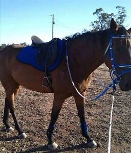 16hh tb for free off property lease Katanning Pallinup Area Preview