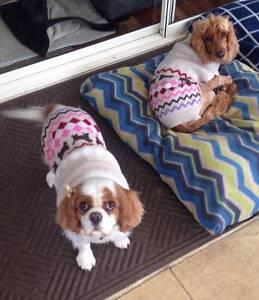 Nikki T Pets Berwick Casey Area Preview