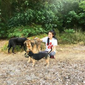 Experienced Dog Walker And Pet Sitter Coventry