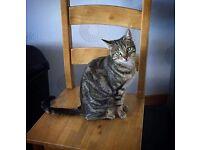Miss Cat **Salcoats** still missing