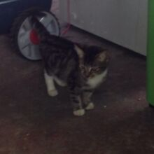 Kittens for sale Daisy Hill Logan Area Preview