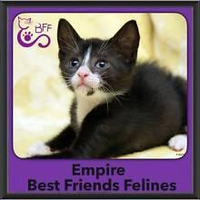 Empire - Best Friends Felines McDowall Brisbane North West Preview
