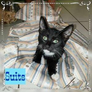 Suits~Rescue Kitten~Vet work included