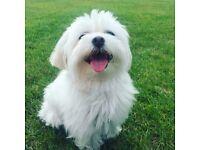 Toto Dog Walking, Fully Insured Dog Walker in Chelsea (Hyde Park/Battersea Park)