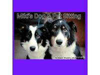 Miki's Home Dog and Pet Sitting Belfast Cat, rabbit, furry, Antrim, Northern, NI, UK, Sitter, Minder