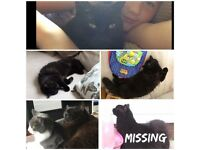 Missing cat - lost newhey - msg if found please