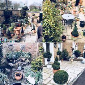 Gardener - Leigh on Sea Garden Care