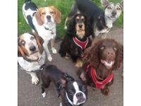 Pilrig Paws Dog Walking and Daycare