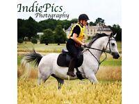 Stunning 15.1 pure bred Arabian gelding full/part loan