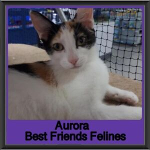Aurora - Best Friends Felines