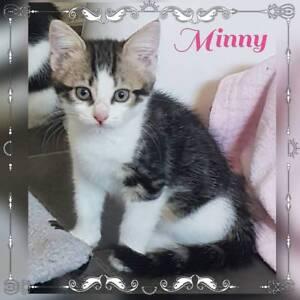 Minny~Rescue Kitten~Vet Work Included