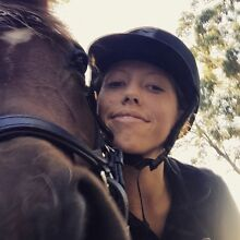 Lease horse for casual riding Warranwood Maroondah Area Preview