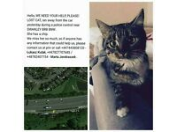 Lost missed cat. CINDI - reward 100£ !! Lost in this area - SWANLEY BR8 8NW