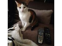 Looking to rehome our Cat.