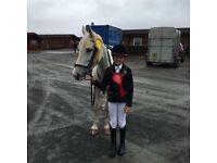 Minty 14.2 jumping pony