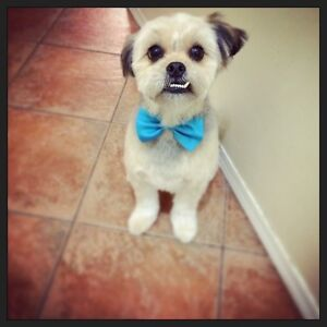 DOG GROOMING ALL BREEDS LOCATED NORTHSIDE